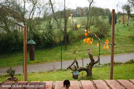 Studio nature : piquets, mangeoire et branche !