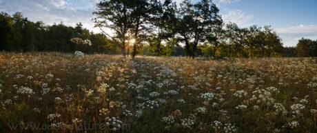 La Pelouse aux brebis (Parc Naturel de la Forêt d'Orient)