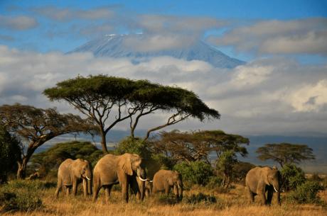 Safari photo en Afrique : quel destination choisir ?