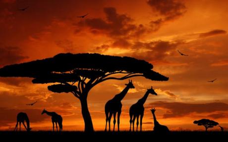 Safari en Afrique : les meilleures destinations !